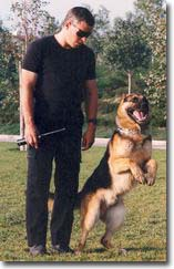Jack with his police service dog in 1993